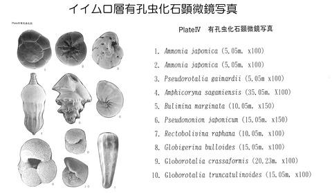 イイムロ層有孔虫化石写真リスト