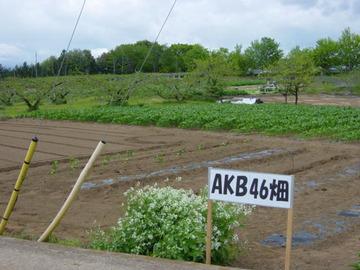 akb-3-1