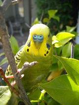 bird21