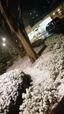 190210_東京雪1