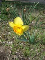 春のお庭3 008