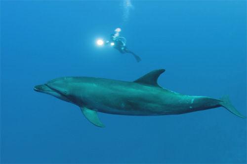 dlphin