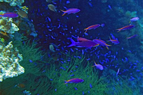 purplebeauty