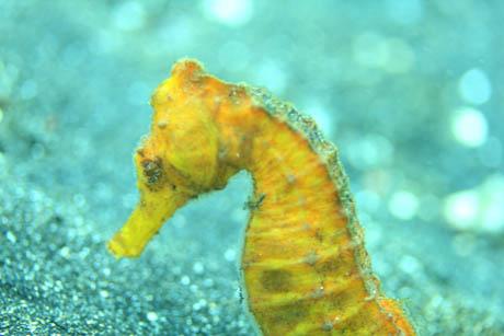 hosefish1