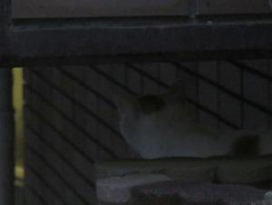 猫ひきつづき行方不明