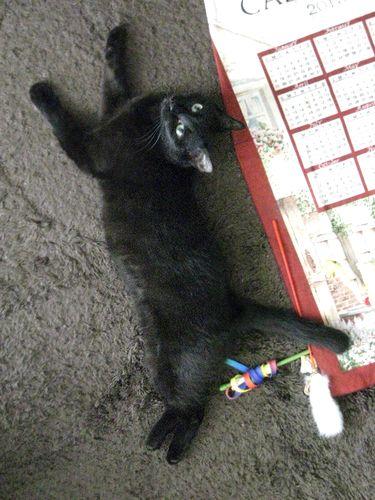 猫はと脂肪と毛とカワイイで出来ている
