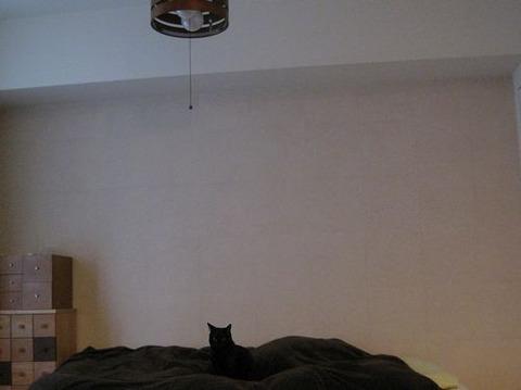 猫ベッド完成~