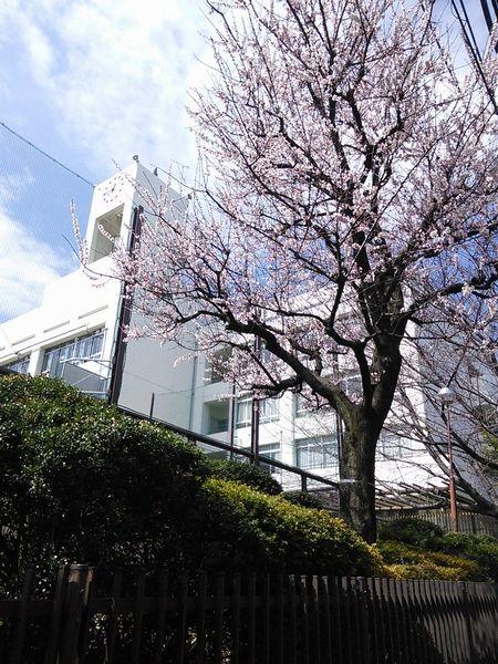 桜の季節になりましたが
