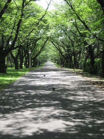 ちょっと前よく散歩した公園