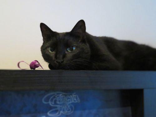 猫はまたお留守番の日々