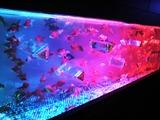 20120826アートアクアリウム金魚展29