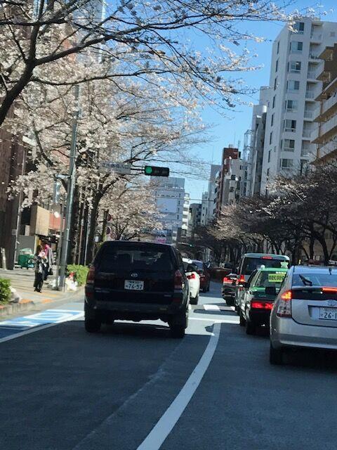 桜20200320