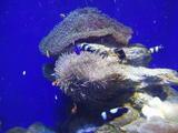 20100322新江ノ島水族館29水槽