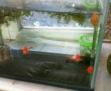 20100110金魚2