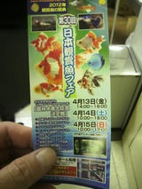 20120415金魚の品評会2
