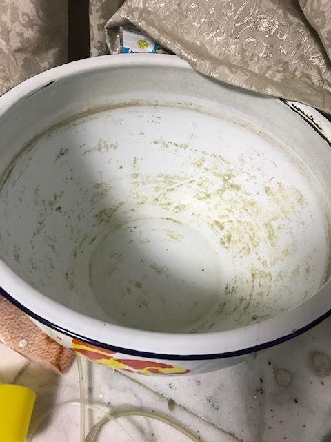 ランちゃん鉢20180518