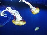20100322新江ノ島水族館23クラゲ