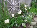 車輪(実家の庭)