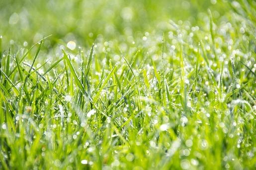 grass-1326759_1280