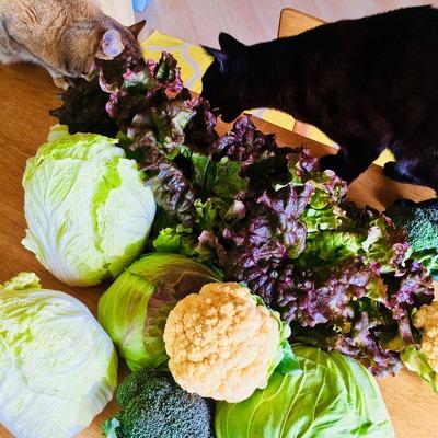 お野菜いっぱい