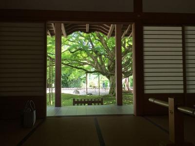 千如寺の大楓。2