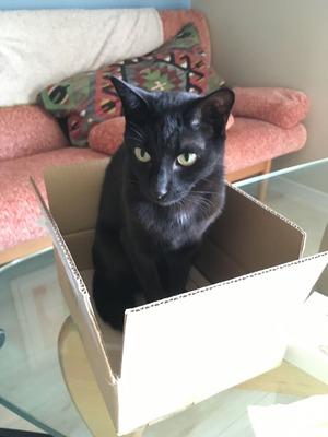 箱の中のかいくん。