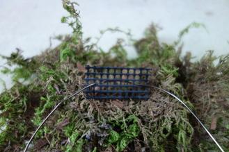 吊るし苔玉の作り方 鉢底網を使う