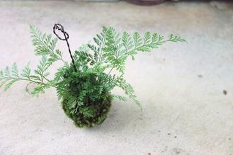 夏にピッタリな吊り苔玉の作り方