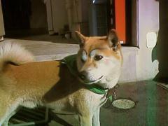 イチロー選手の犬