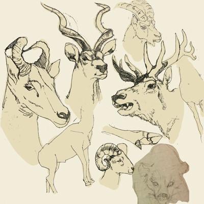 哺乳類展の2