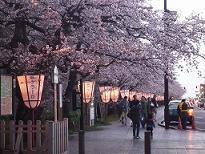 小-弘前桜まつり2010 048