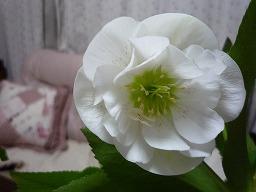 小-弘前桜まつり2010 060