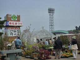 小-弘前桜まつり2010 067