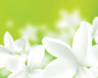 fresh-flower-white-isolated-green_18-7884