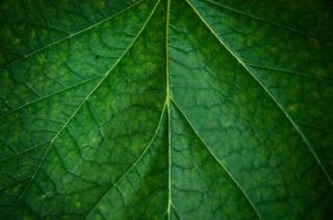 leaf-texture--green_19-133728