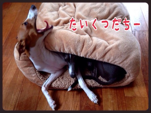 2015-09-01-19-09-26