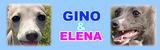 GINO_banner-f019b