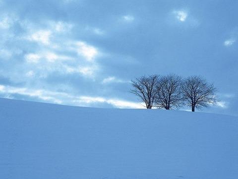 sky_trees_1024