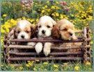 dogs-photo02_135x104