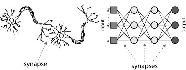ニューラルネットワークとシナプス
