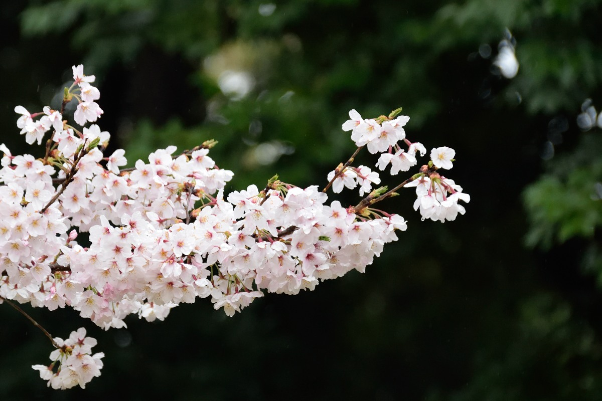 2016_04_03_09