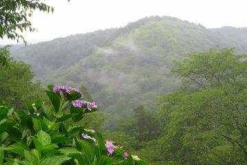 nanamagari20200618-04