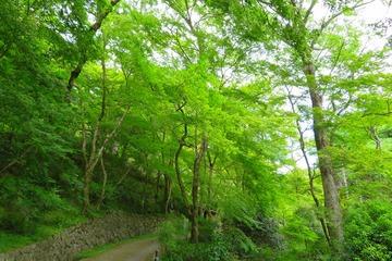syoryakuji20190520-01