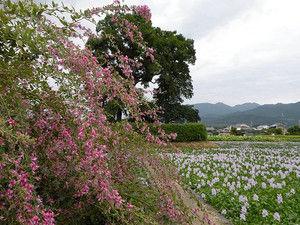 10motoyakushiji