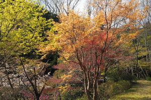 Hazeshokubutuen2016041605
