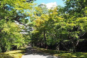 Katsurarikyu2016082102