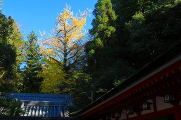 34isonokamijigu20201124