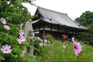 Hannyaji201506191