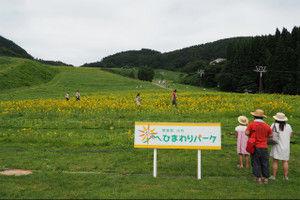Ojiro_himawari201507201