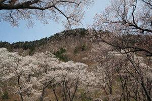 Byobuiwa_park2016041606